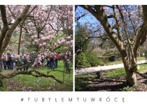 Magnolie w Arboretum Kórnickim - zdjęcie nadesłane przez Arboretum Kórnickie