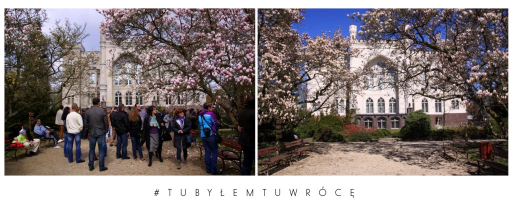 Magnolie i Zamek Kórnicki - zdjęcie nadesłane przez Arboretum Kórnickie