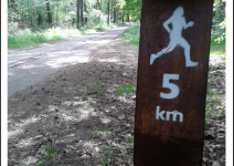 Trasy biegowe w Lesie Palędzko-Zakrzewskim - zdjęcie nadesłane przez Urząd Gminy Dopiewo