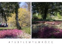 Wrzośćce w Arboretum - zdjęcie nadesłane przez Arboretum Kórnickie