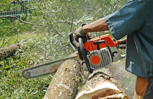 SEMINARIUM: Wybrane problemy związane z wycinką drzew i krzewów po nowelizacji